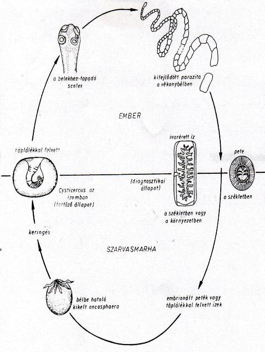 gyógyszer helminths vormil