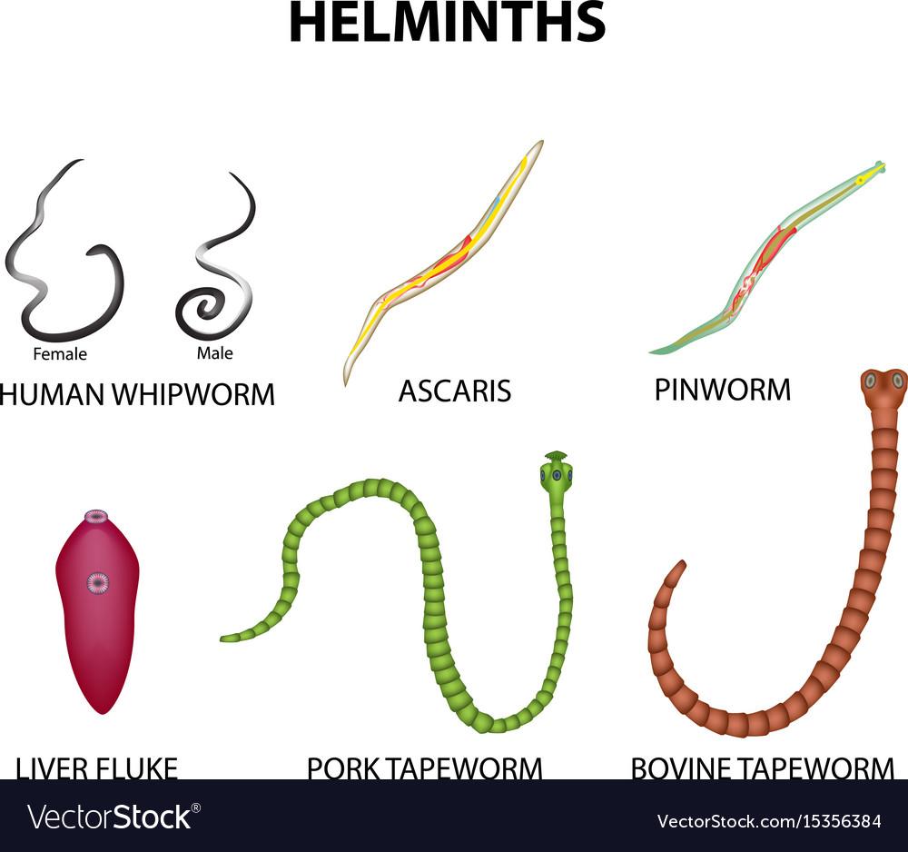 szer a helminthiasis megelőzésére