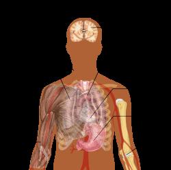 az emberi test paraziták kezelése recanati sicilie