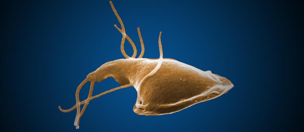 giardia bug stomach parazitál minden sorozatot egymás után