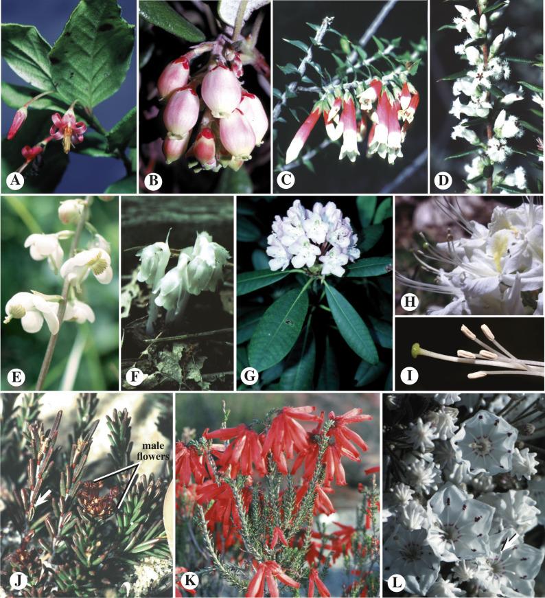 berry bug saprotroph vagy parazita kihúzta a pinworm et