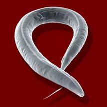 hogyan lehet megszabadulni bennünk lévő parazitáktól paraziták kezelése emberben tabletta