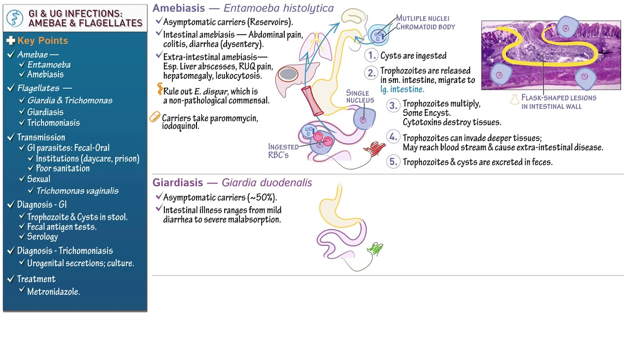 giardiasis bilirubin