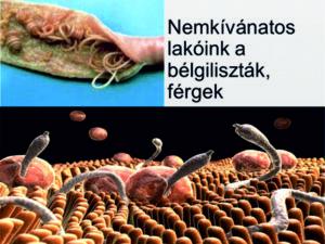 cernagiliszta a szekletben a rossz lehelet és a száraz nyelv okozza