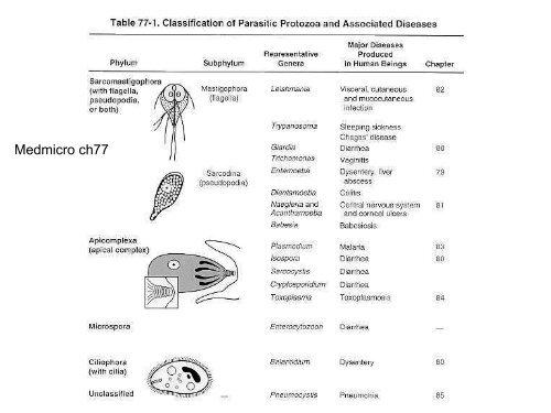 szöveti helminthiasis emberi máj paraziták fotók