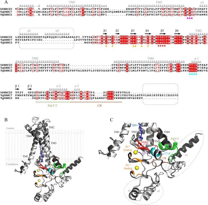 A malária genomikájában és az epigenomikában a közelmúltban elért eredmények
