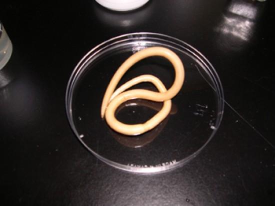 kezelés paraziták flukes tabletták férgek számára 1 db csomag