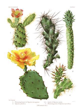 kaktuszok és paraziták kezelése