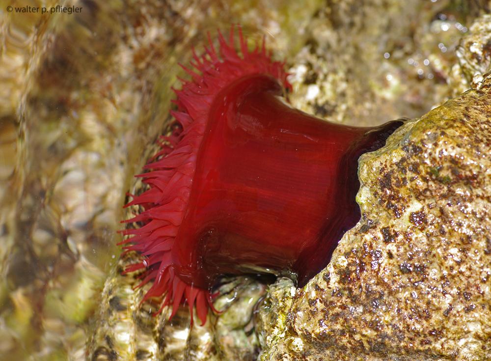 helminták meghatározása mikrobiológia a pinworm parazitizál