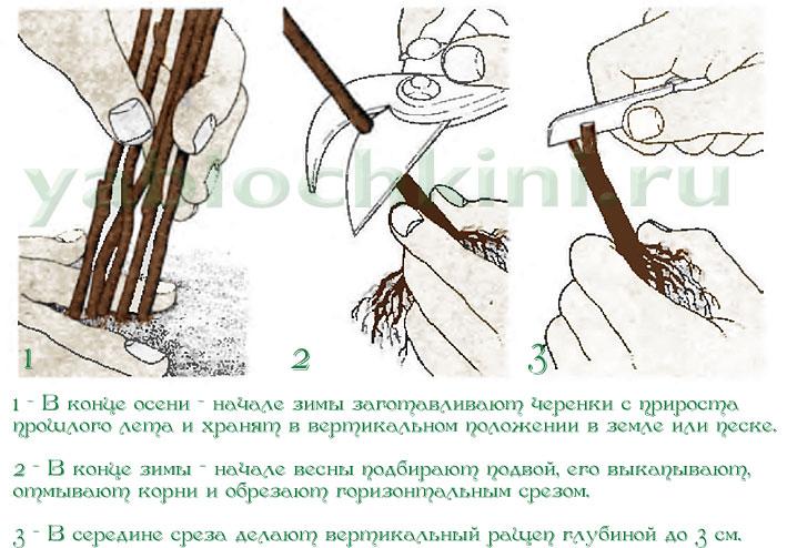 Pinworms kezelése: tünetek és gyógyszerek