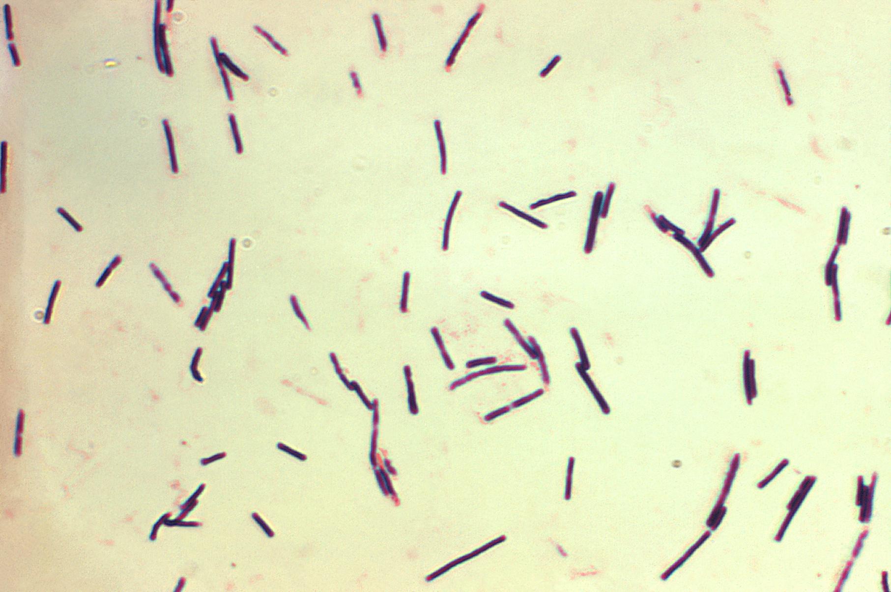 trichinella tünetek kezelése helminták a gyógyszertárban