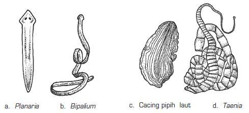 Úvod do zoologie Porifera, Cnidaria, Ctenophora, Platyhelminthes - ppt stáhnout