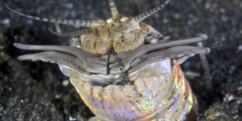 Annelida - gyűrűsférgek Testfelépítés - PDF Ingyenes letöltés