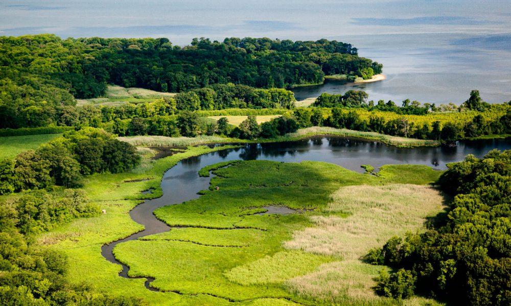 chesapeake öböl paraziták 2020