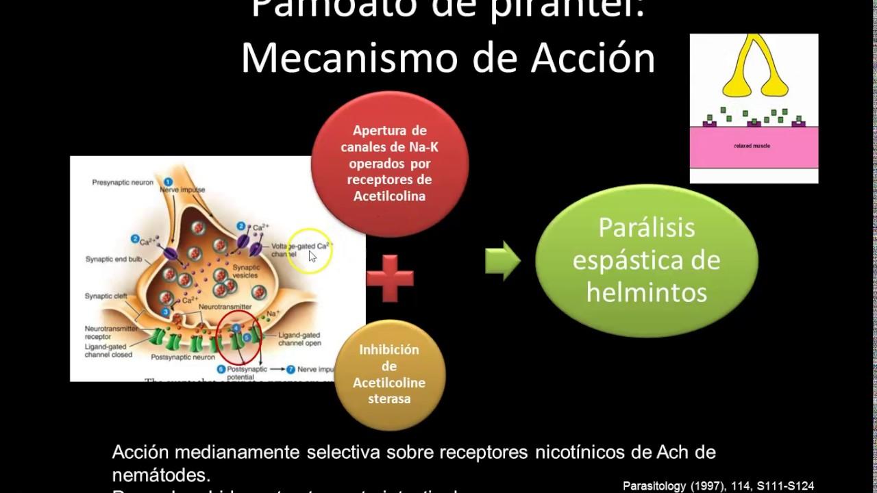 hogyan különböznek a saprotrofák a parazitáktól férgek helminták paraziták kezelése