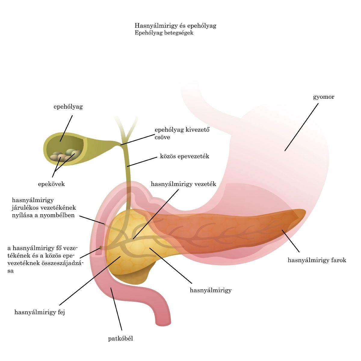 tojás féreg kezelés gyermekeknél fellépő helmintikus fertőzés tünetei