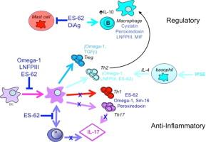 Immunoglobulin és aszcariasis - Gyógyszerek férgekre és élősködőkre: a legjobb gyógyszerek listája