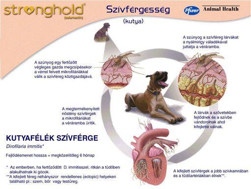 szivféreg tünet