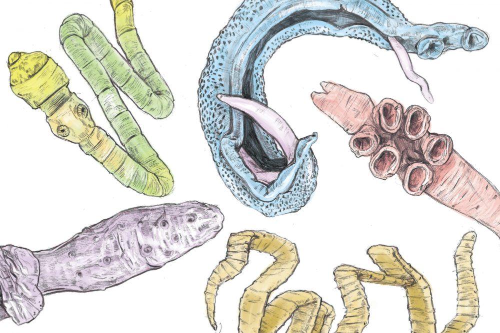 Parazita | Agrárium, mezőgazdaság és élelmiszeripar