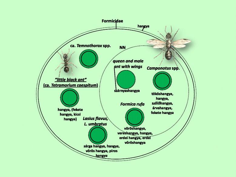 a férgek tablettáinak hatásának elve a vírusok kötelező paraziták