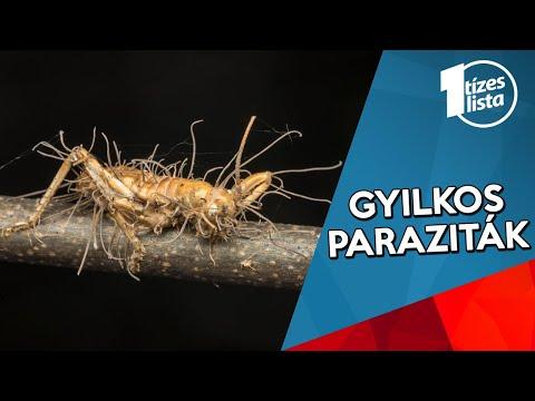 az epevezetékben élő paraziták