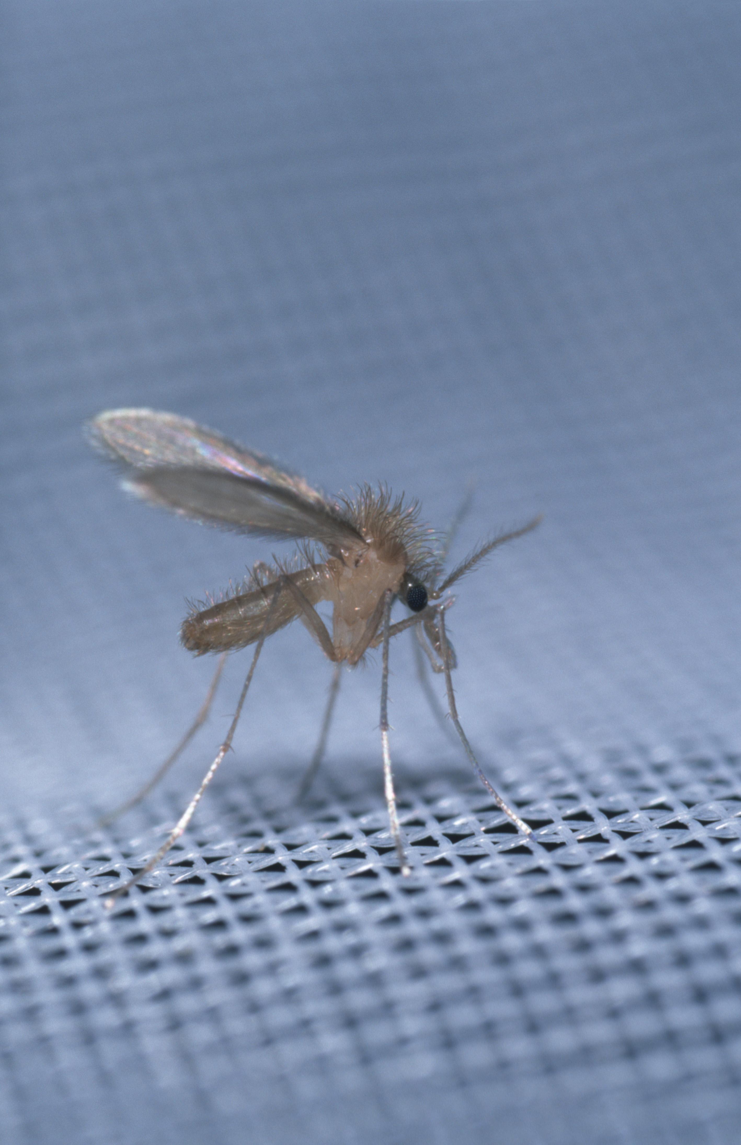 Az állati stádiumokat nem paraziták okozzák féregfertőzés a cmd ben