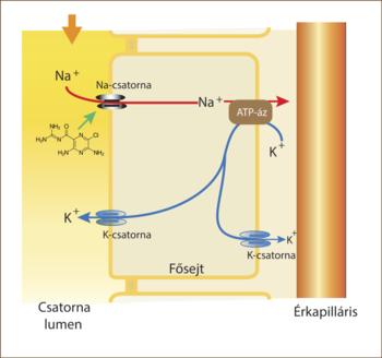 diuretikumok a víz visszatartásához a testben