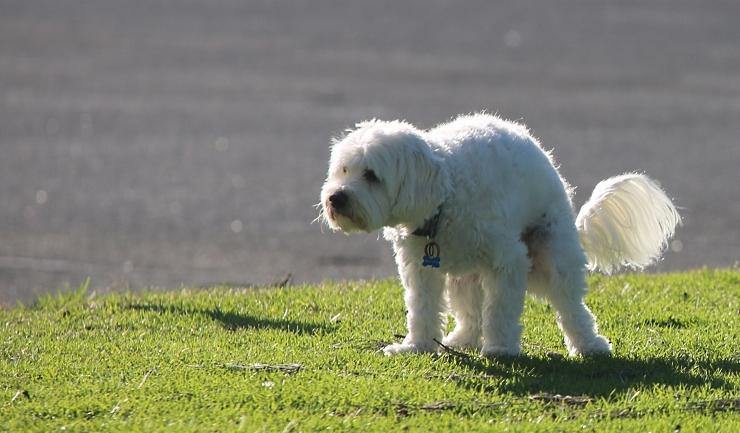 Giardia bacterie bij honden. Giardia mensen behandeling
