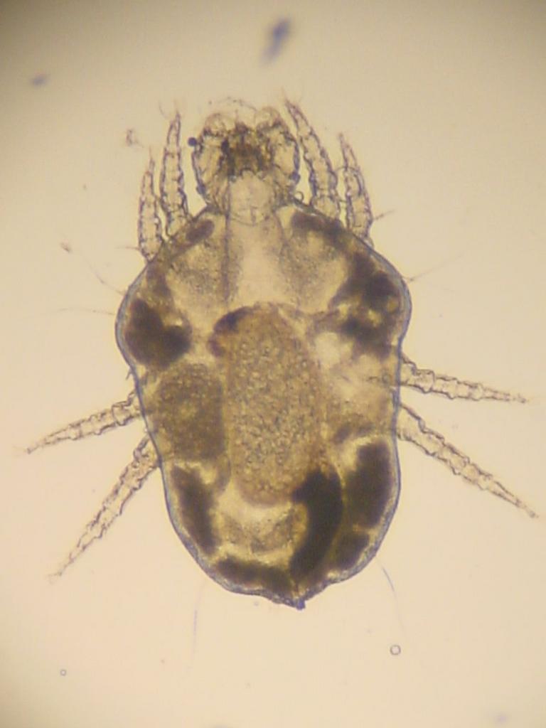 Zoonózis protozoai paraziták - A parazitákról általában