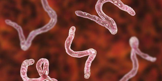 ankilostomiasis patogenezis