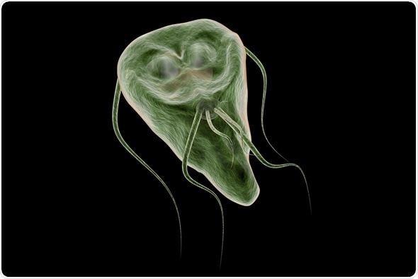 giardia what to eat