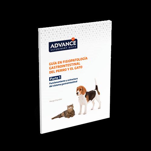 Metronidazol macskáknak - használati utasítás, adagolás - Általános kérdések