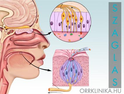 száj és orr szaga yógyszerek gyermekek férgek számára