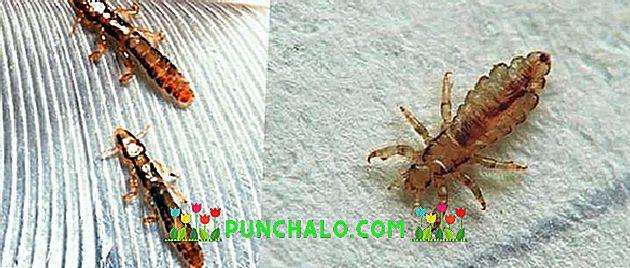 pinworms gyermekek és felnőttek kezelése