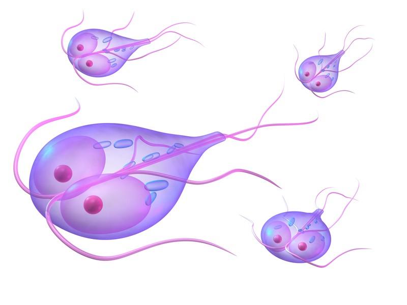 giardia bug stomach toxikózis és rossz lehelet