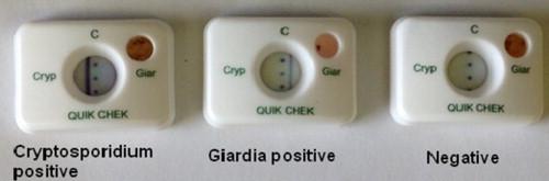 giardia cryptosporidium ag stool