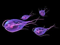 toxikózis és rossz lehelet a parazitafertőzés jelei az emberek kezelésében