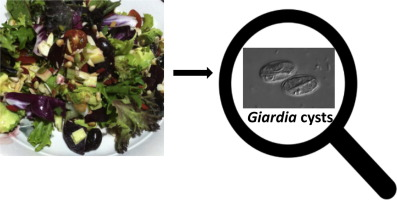 Giardia soil treatment