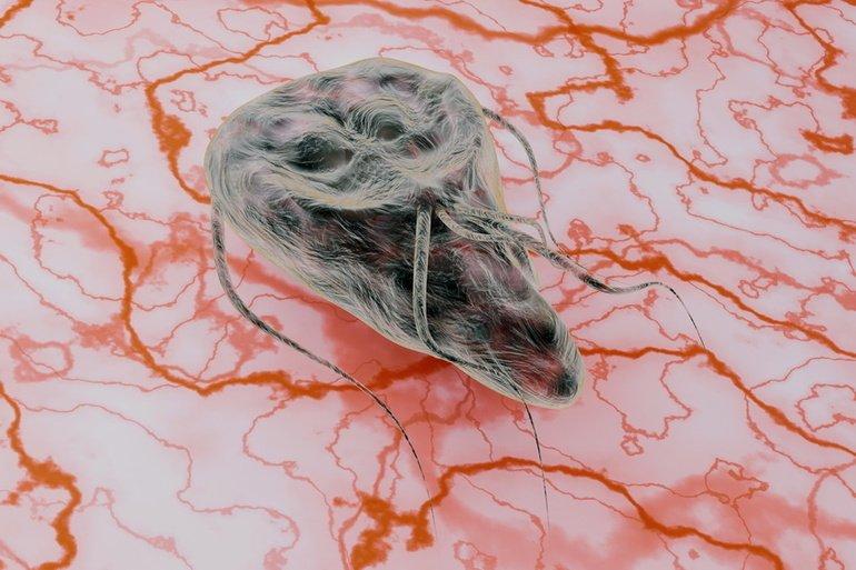 vegbel fergek kezelese vajon a trichocephalosis fertőző e
