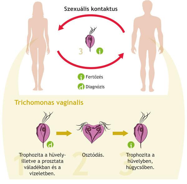 helminth fertőzés terhesség alatt