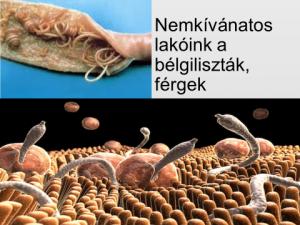 megtisztítása a férgekkel szemben a férgektől erős tabletták a parazitákhoz és tojásukhoz