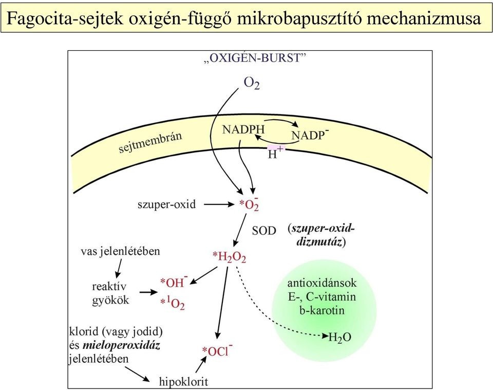 mikrobák intracelluláris paraziták