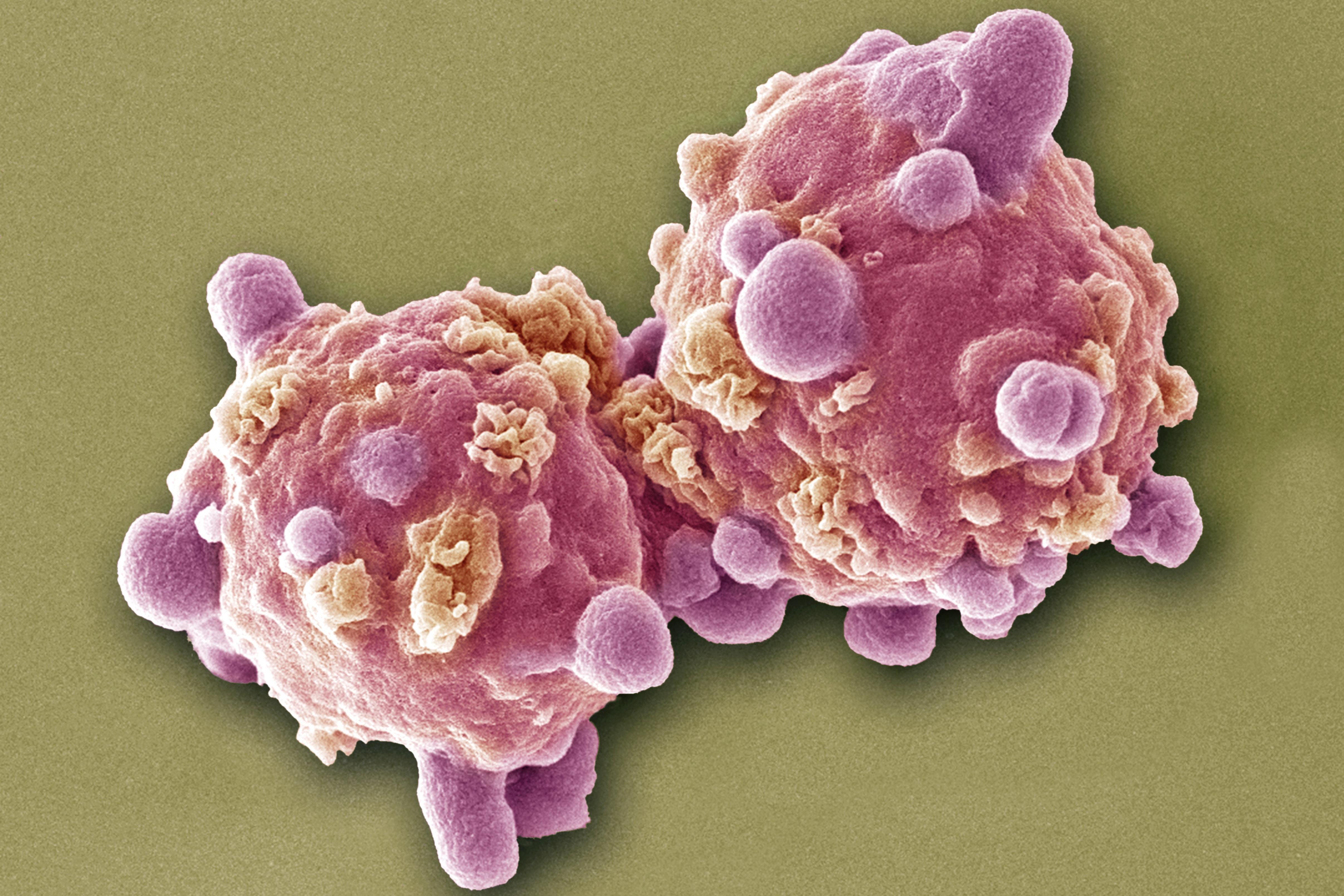 mit jelent a parazita a gazdaszervezetek alkalmazkodása a parazitákhoz