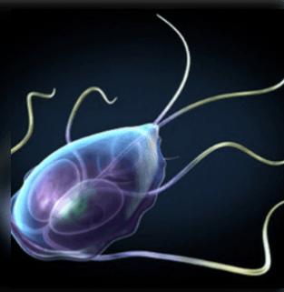 Paraziták jelenléte a szervezetben