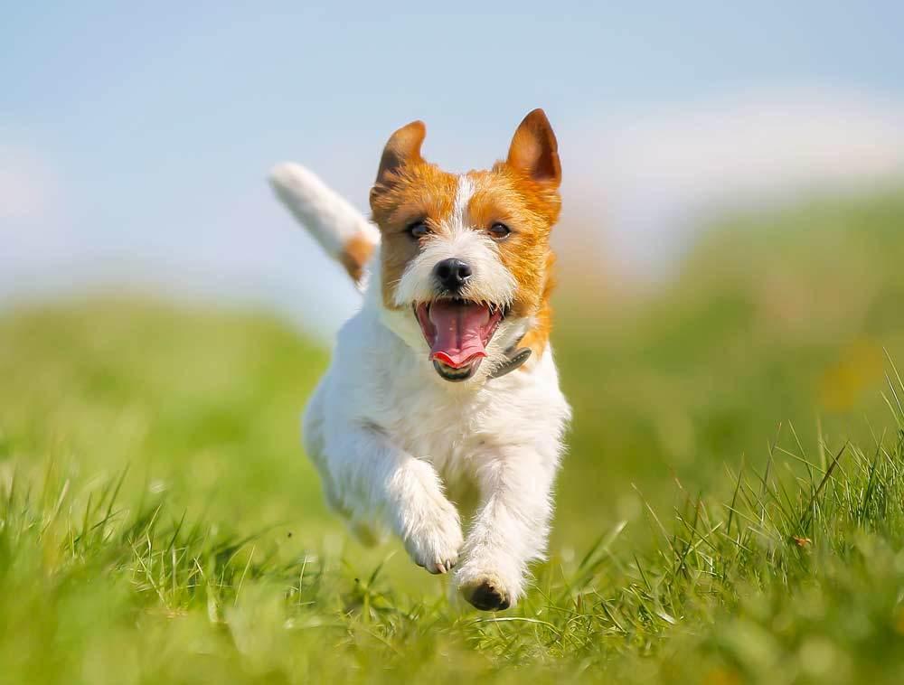 Érzékeny bőrű és emésztésű kutyák – a tünetek felismerése