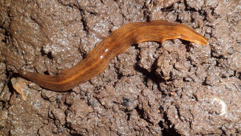 pinworms kiszállni