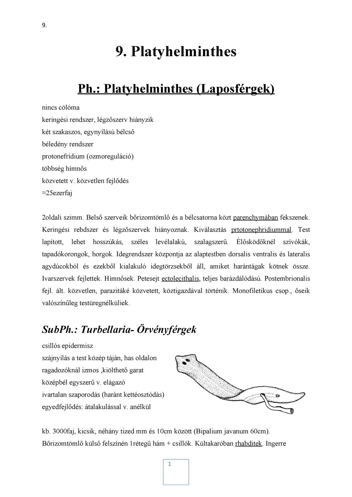 Biológia - évfolyam | Sulinet Tudásbázis - Platyhelminthes idegrendszer