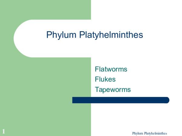 platyhelminthes ppt szarvasmarha- szalagféreg- fertőzés forrása