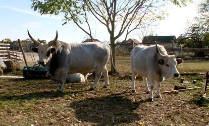 Giardia kod ljudi simptomi - Írj egy bika lánc fejlesztési ciklust