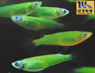 Rejtélyes féreg fertőzi a halakat | Kárpányelvprofil.hu